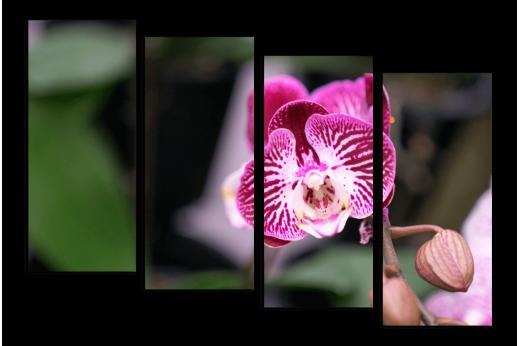 Модульная картина Бордовая орхидея
