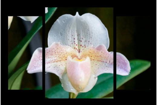 Модульная картина Белая орхидея в зелени