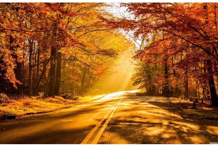 Модульная картина Утро в осеннем лесу