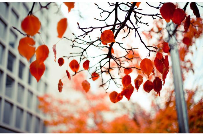 Модульная картина Осенняя листва