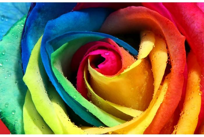 Модульная картина Разноцветный бутон