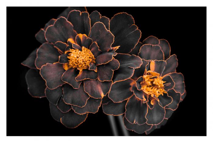 Модульная картина Темные цветы