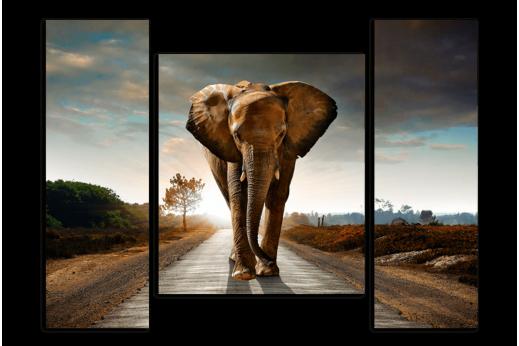 Модульная картина Слон на дороге