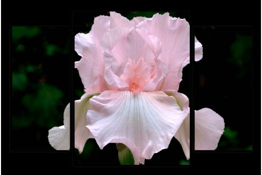 Модульная картина Светло-розовый ирис