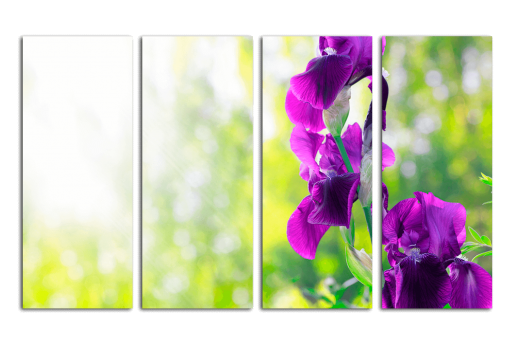 Модульная картина Тёмно-фиолетовые ирисы