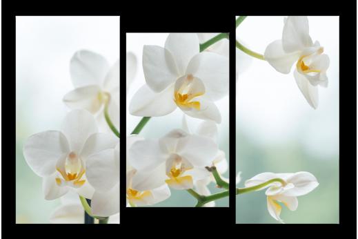Модульная картина Белоснежные орхидеи