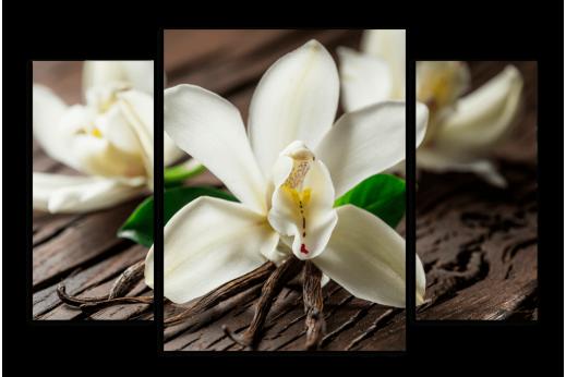 Модульная картина Ванильные цветы