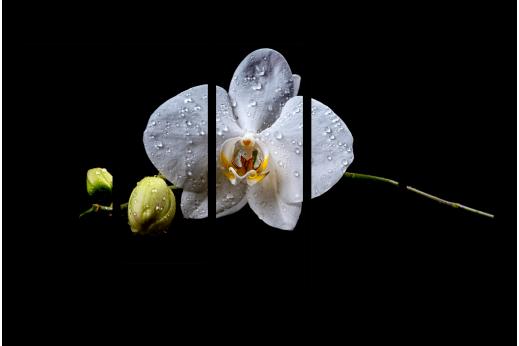 Модульная картина Капли на орхидее