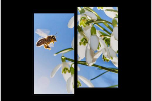 Модульная картина Подснежник с пчелой