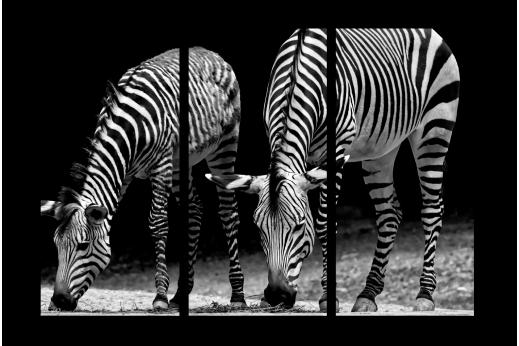 Модульная картина Черно-белые зебры